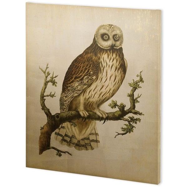 Mercana Antique Nozeman Owls II (44 x 55) Made to Order Canvas Art