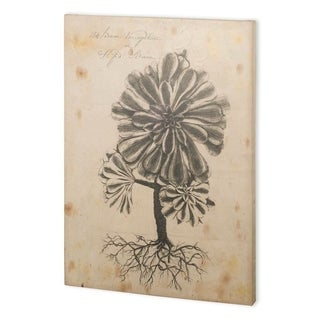 Mercana Thornton Succulents IV (44 x 58) Made to Order Canvas Art