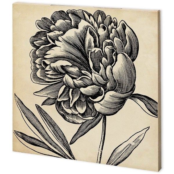 Mercana Graphic Floral II (44 x 44) Made to Order Canvas Art