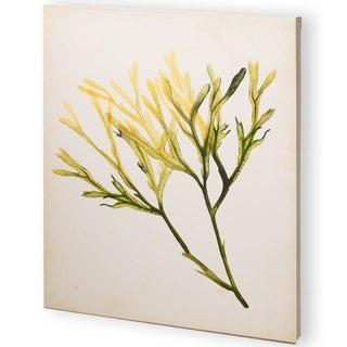 Mercana Watercolor Sea Grass V (44 x 55) Made to Order Canvas Art