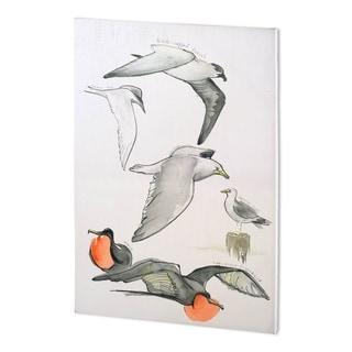 Mercana Bird Study II (38 x 56 ) Made to Order Canvas Art