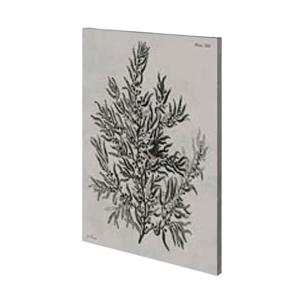 Mercana Sargassum (36 x 54) Made to Order Canvas Art