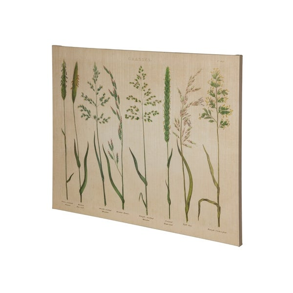 Mercana HR_Herbal Botanical VII (37 x 30) Made to Order Canvas Art
