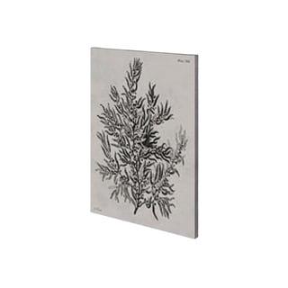 Mercana Sargassum (28 x 42) Made to Order Canvas Art