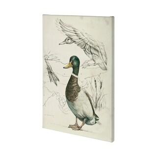 Mercana Duck Study II (36 x 54) Made to Order Canvas Art