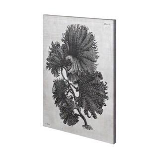 Mercana Thalassophyllum (36 x 57) Made to Order Canvas Art