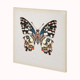 Mercana Butterfly Study II (30 x 30 ) Made to Order Canvas Art