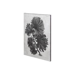 Mercana Thalassophyllum (28 x 42) Made to Order Canvas Art