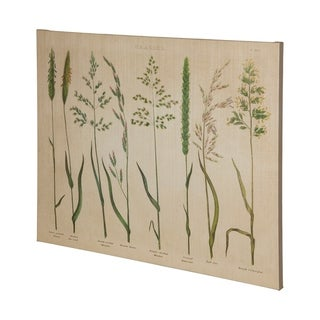 Mercana HR_Herbal Botanical VII (47 x 38) Made to Order Canvas Art