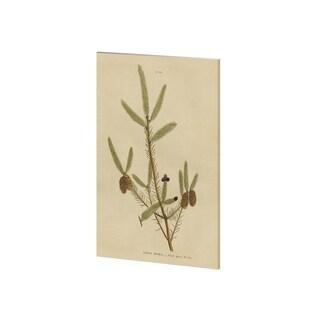 Mercana Herbal Botanical XIV (28 x 38) Made to Order Canvas Art