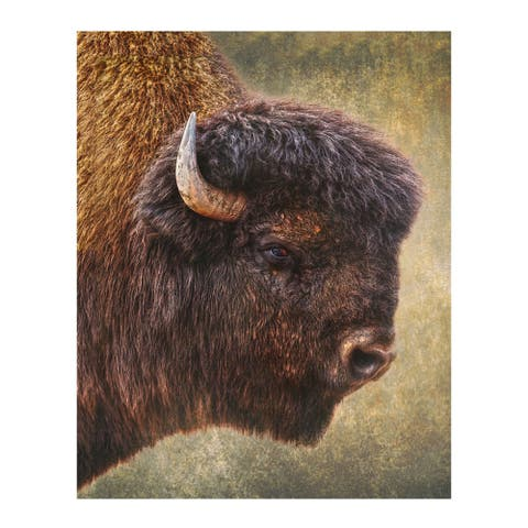 Christopher Knight Collection: Big Shaggy Canvas Wall Art - Multi-color