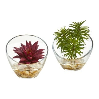 Succulent Artificial Plant in Slanted Glass Vase (Set of 2)