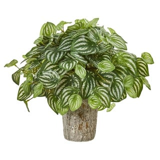 Peperomia in Weathered Oak Vase Real Touch Artificial Plant