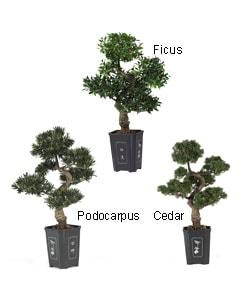 Artificial Bonsai Tree (36 in.)