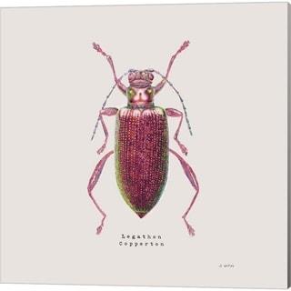 James Wiens 'Adorning Coleoptera Sq Claret' Canvas Art (Set of 2)
