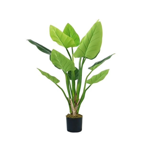 "54""H Philodendron Erubescens Green Emerald - Black"