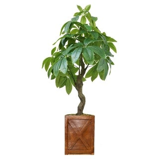 "37"" Pachira Aquat Real touch, indoor/outdoor in Fiberstone Planter - bronze"