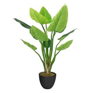 """33.6"""" Philodendron Erubescens Green Emerald in Fiberstone Planter - Black"""