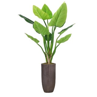 """62.25"""" Philodendron Erubescens Green Emerald in Resin Planter - Brown"""