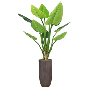 """Laura Ashley 62.25"""" Philodendron Erubescens Green Emerald in Resin Planter - Brown"""