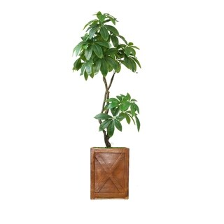 "41"" Pachira Aquat Real touch,  indoor/outdoor in Fiberstone Planter - bronze"