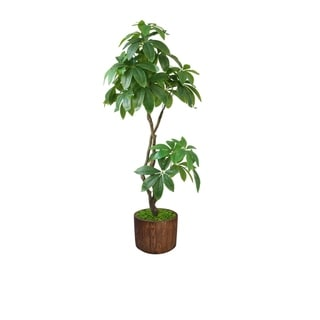 "37"" Pachira Aquat Real touch,  indoor/outdoor in Fiberstone Planter - Brown"