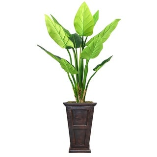 """77"""" Philodendron Erubescens Green Emerald in Fiberstone Planter - black/bronze"""