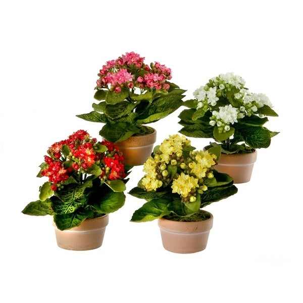 8 Inch Potted Kalanchoe Set of 4