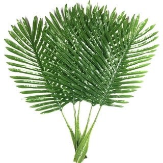 Green Single Leaf Palm for Home Kitchen