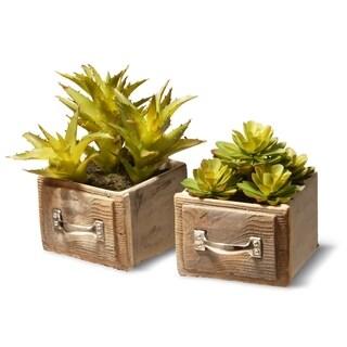 Succulent Plant (Set of 2)