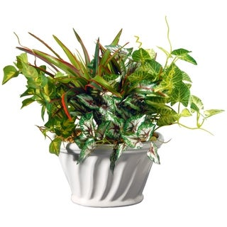 11-inch Potted Plant