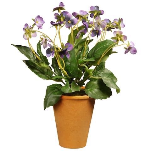 "16"" Wild Pansy Plant"