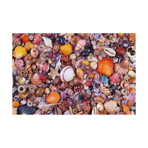 Seashells Jigsaw Puzzle: 1000 Pcs