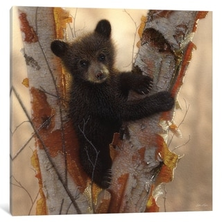 "iCanvas ""Curious Black Bear Cub I, Square"" by Collin Bogle"