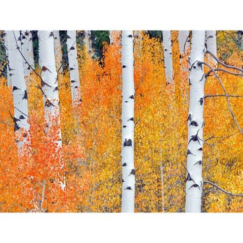 Fall Aspen Tree #2 Indoor/Outdoor Art - Multi-color