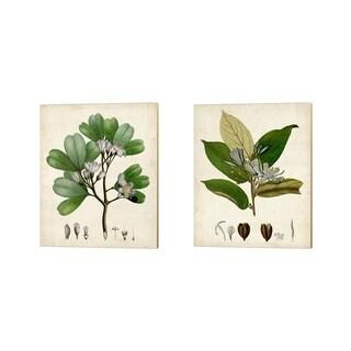 Vision Studio 'Verdant Foliage A' Canvas Art (Set of 2)