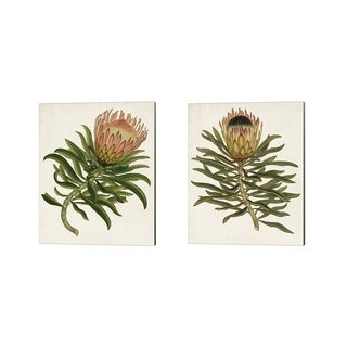 Unknown 'Antique Protea A' Canvas Art (Set of 2)