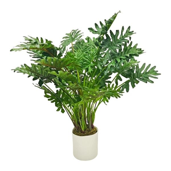 Modern tropical split philo desktop plant