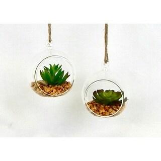 Set of 2 Hanging succulent terrarium