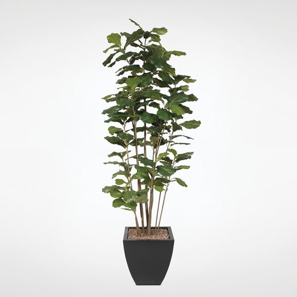 7' Fiddle Leaf Tree with Artificial Trunks in a Black Metal Planter