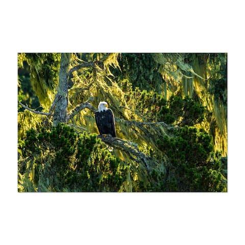 Noir Gallery Bald Eagle Bird Animal Wildlife Unframed Art Print/Poster