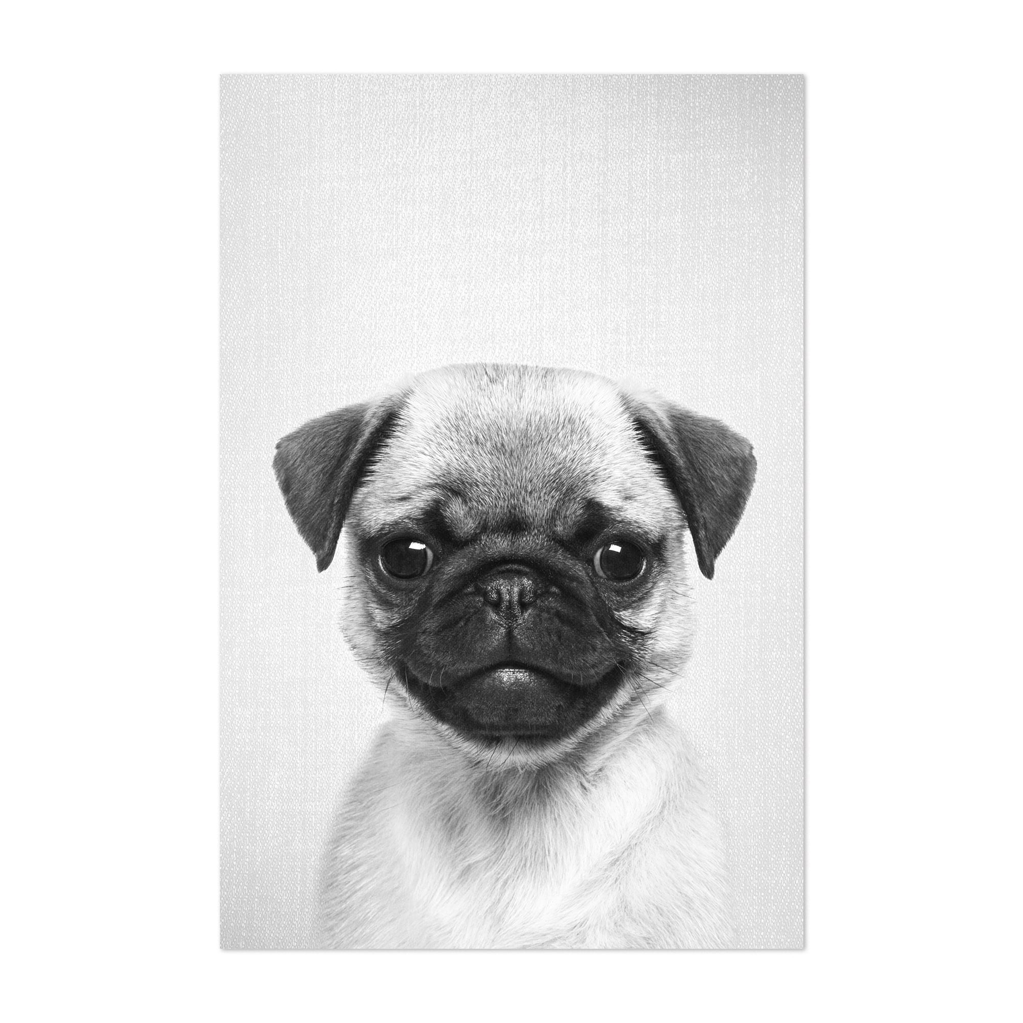 Picture Poster Dog Animal Art Pug Puppy Black White Large Framed Print