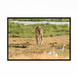 Noir Gallery Namibia Africa Lion Wildlife Framed Art Print