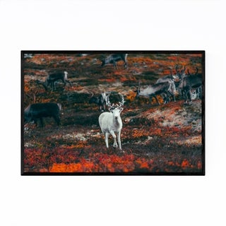Noir Gallery Reindeer Animal Wildlife Sweden Framed Art Print