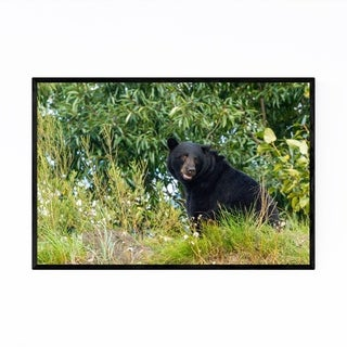 Noir Gallery Black Bear Wildlife Hyder Alaska Framed Art Print