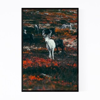 Noir Gallery Reindeer Animal Wildlife Sweden Framed Art Print
