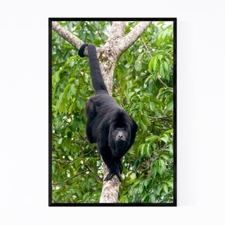 Noir Gallery Howler Monkey Wildlife Mexico Framed Art Print
