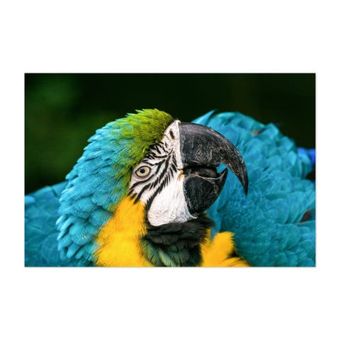 Noir Gallery Macaw Bird Wildlife Bolivia Unframed Art Print/Poster