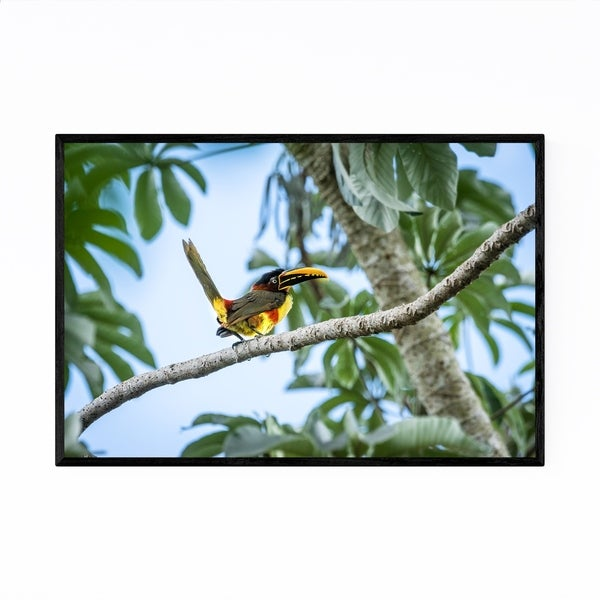 Noir Gallery Aracari Bird Wildlife Brazil Framed Art Print