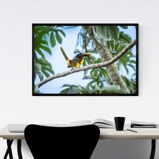 Noir Gallery Aracari Bird Wildlife Brazil Framed Art Print